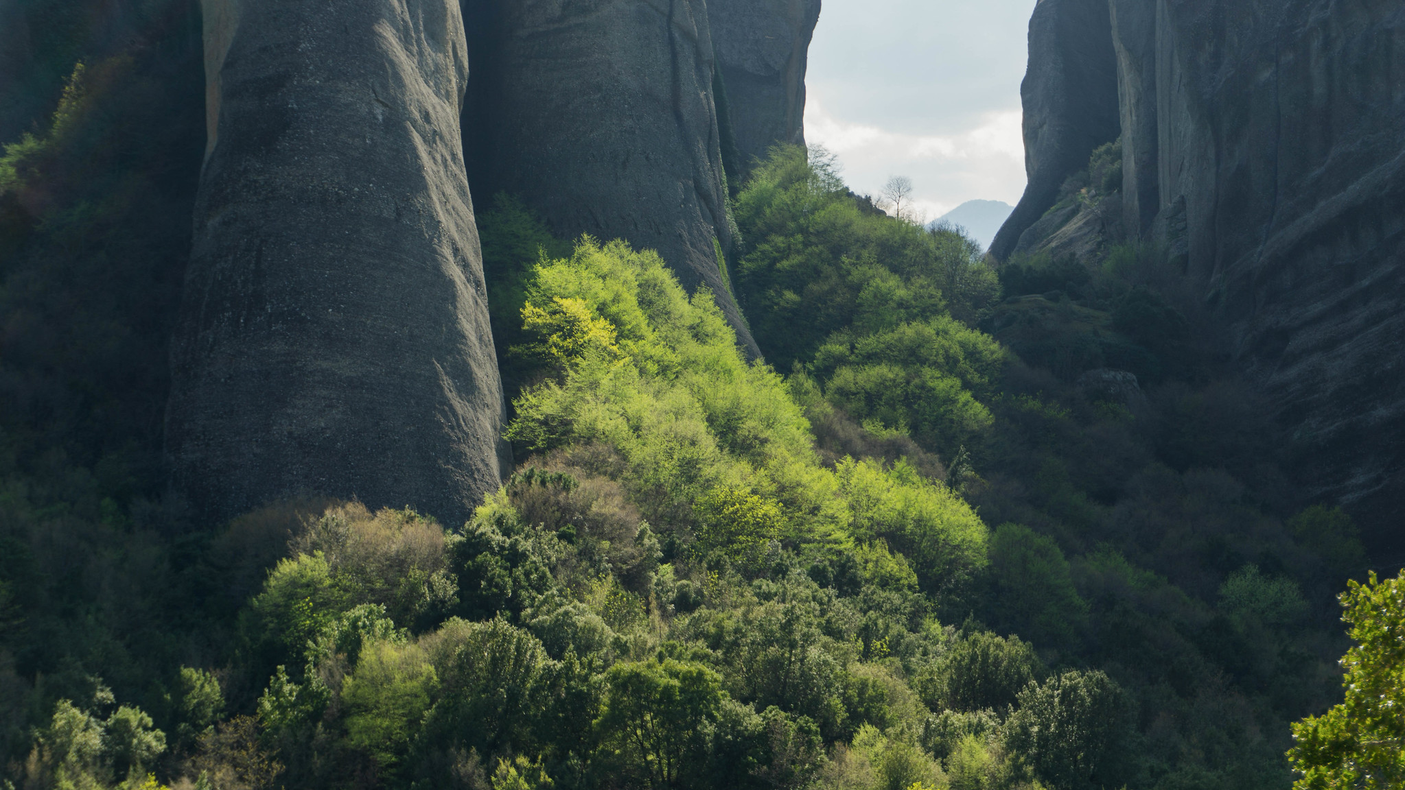 Lush green forest between the conglomerate towers of Meteora